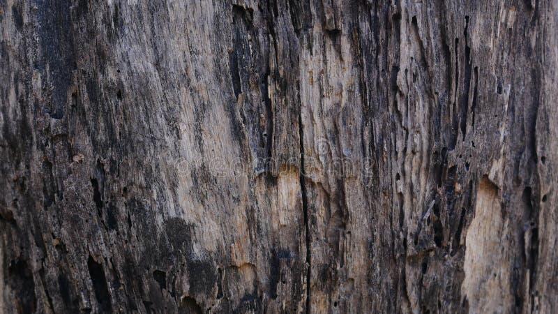 老木墙壁背景,硬木纹理,老木头 免版税库存图片