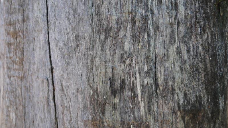老木墙壁背景,硬木纹理,老木头 图库摄影