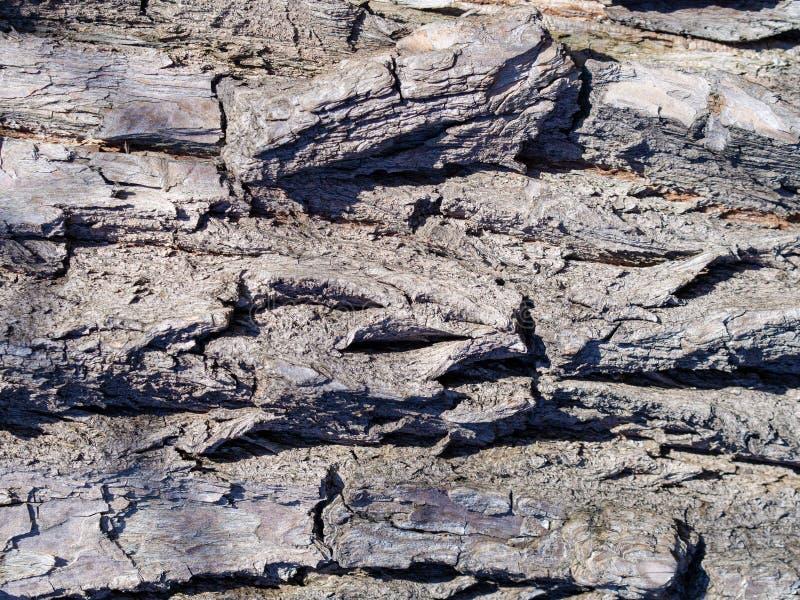 老木树纹理 免版税库存图片