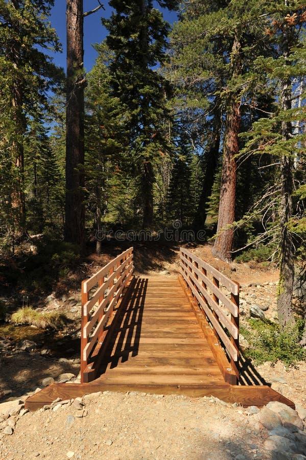 老木桥在有阳光的森林里 图库摄影