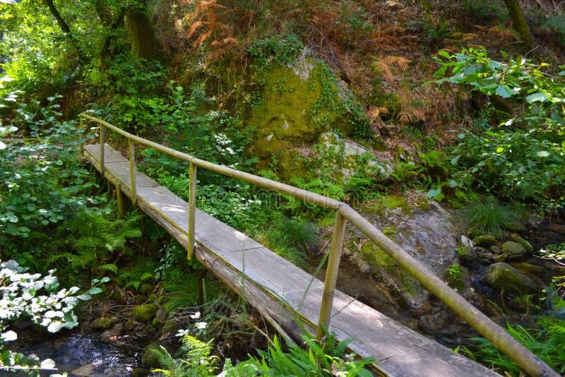 老木桥在狂放的森林的中部的穿过一条河 库存照片