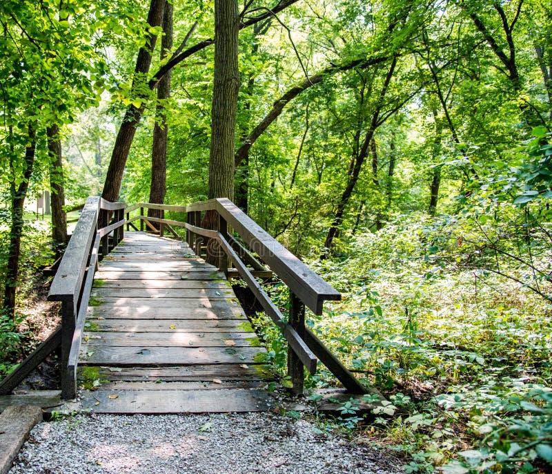 老木桥梁在森林里 图库摄影