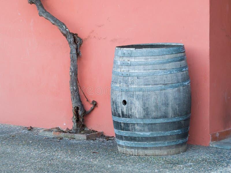 老木桶、葡萄树树干和桃红色墙壁在背景中 免版税库存照片