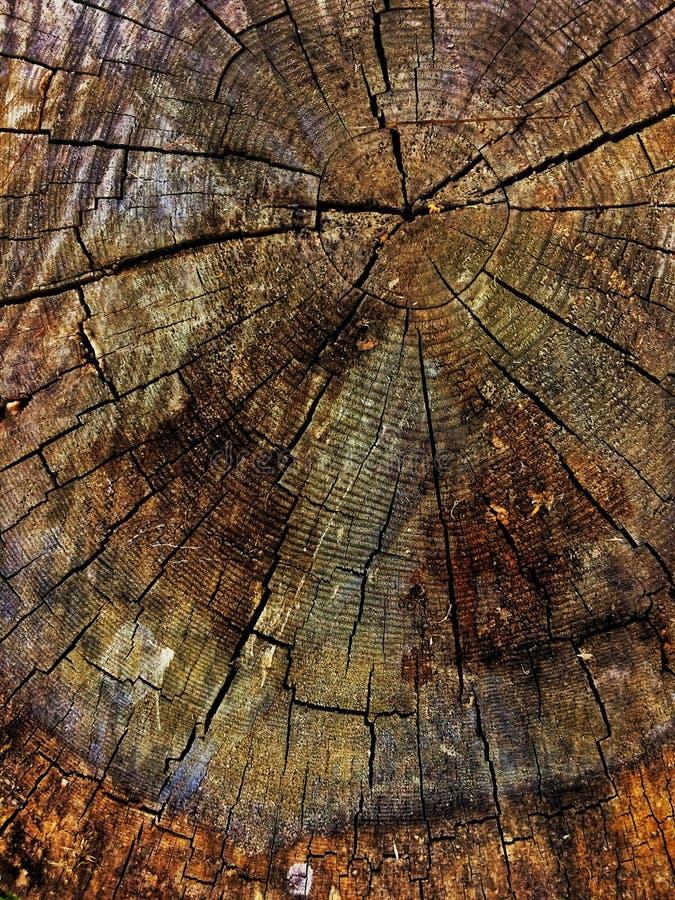 老木残余部分背景 免版税库存照片