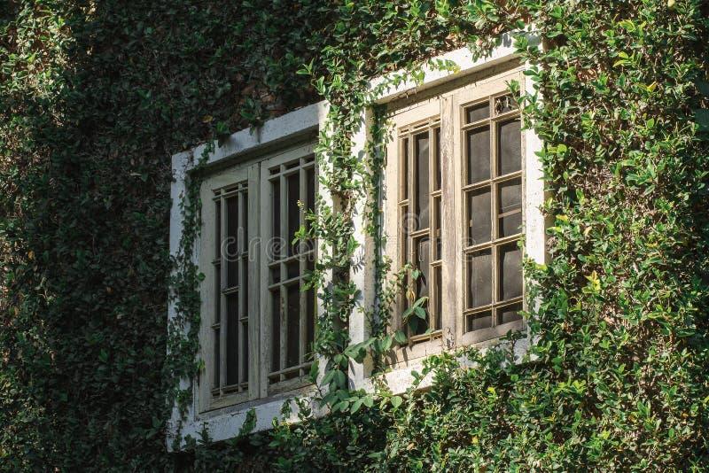 老木窗口用叶子盖 免版税库存照片