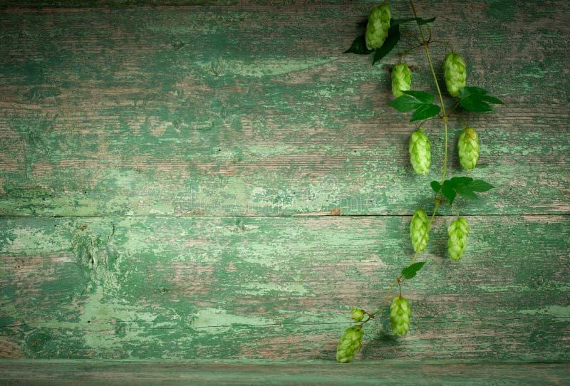 老木篱芭和登山人种植蛇麻草 免版税库存照片
