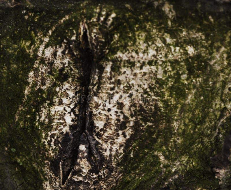 老木纹理,软的焦点 库存照片