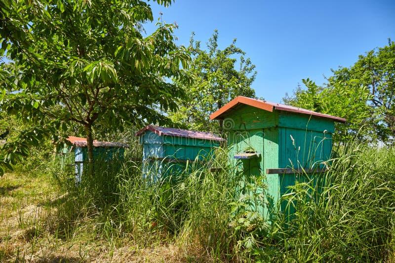 老木蜂箱在一个农村庭院里 免版税库存照片