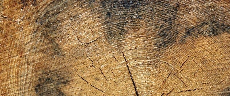 老松木树干圆环纤维纹理特写镜头 图库摄影
