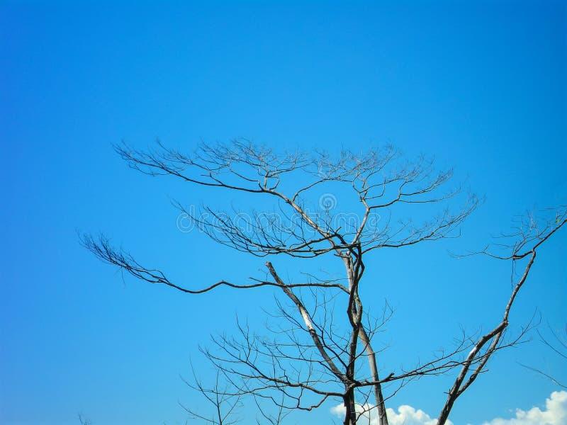 老树反对由蓝天决定 库存照片