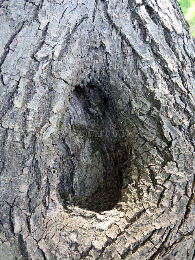 老树干和吠声,立陶宛 库存图片
