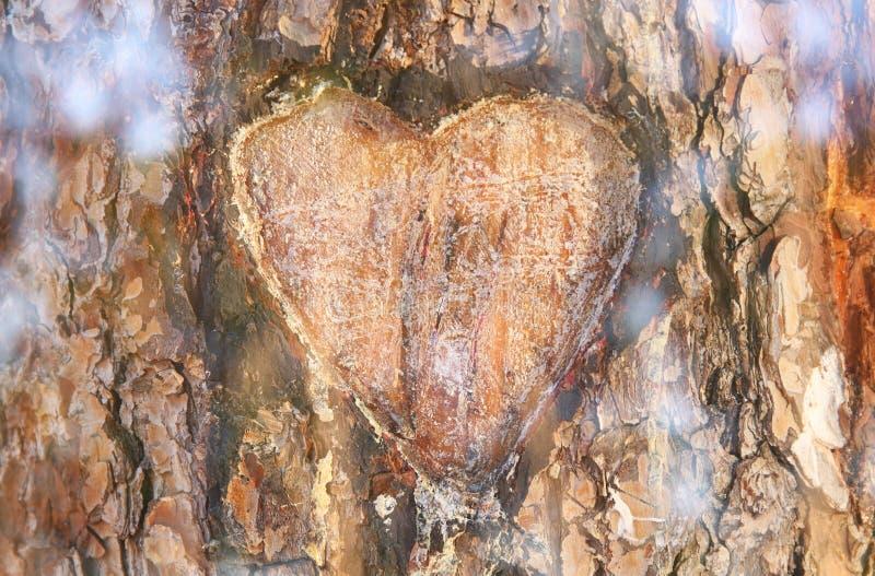 老树干照片与心脏的雕刻了对此 Valentine';s天概念 浪漫背景 免版税库存照片