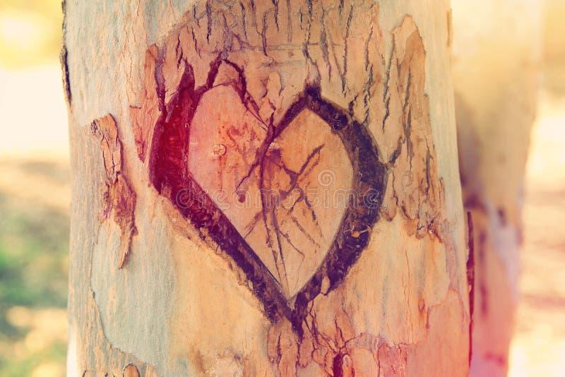 老树干照片与心脏的雕刻了对此 Valentine& x27; s天概念 浪漫背景 库存图片