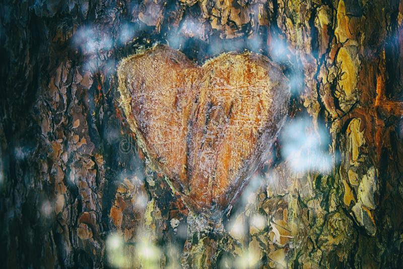 老树干照片与心脏的雕刻了对此 Valentine& x27; s天概念 浪漫背景 免版税库存照片