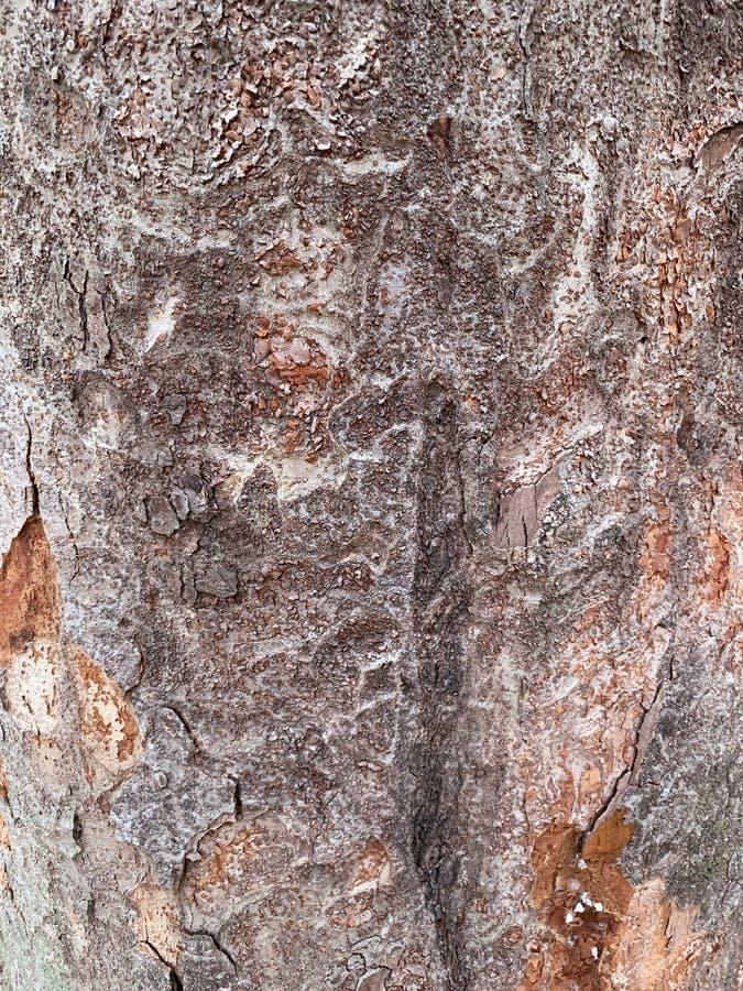 老树干纹理背景 免版税库存照片