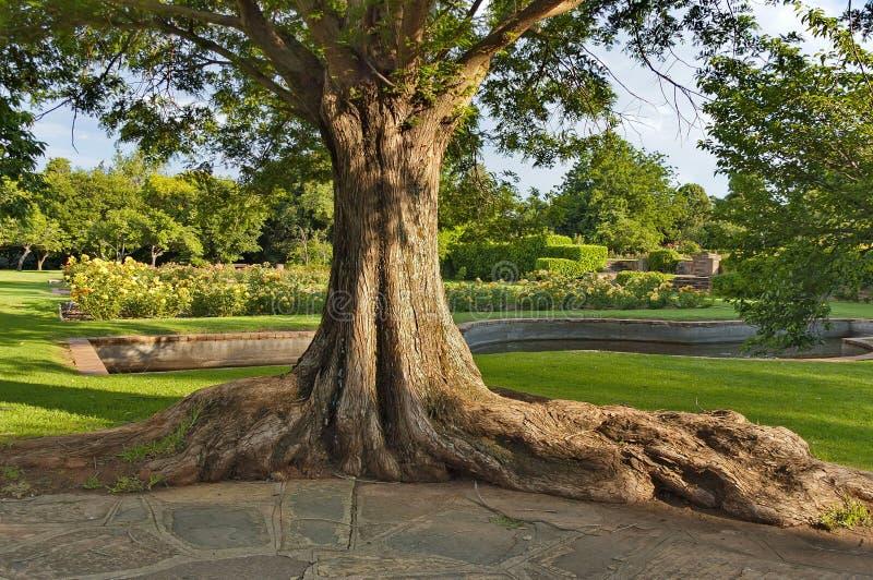 老树树干在植物园里 免版税库存图片