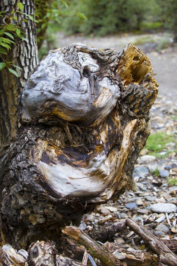 老树根源雕刻特点的根