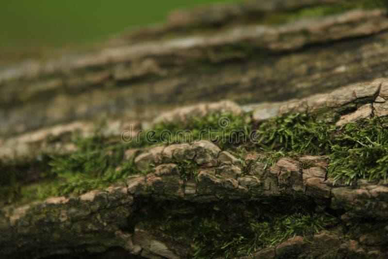 老树的生长植物 免版税库存照片