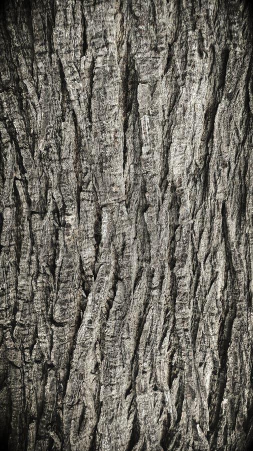 老树皮纹理 免版税库存照片