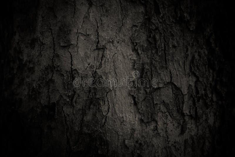 老树皮肤 图库摄影