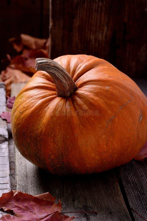 老树静物画秋天的南瓜 库存照片