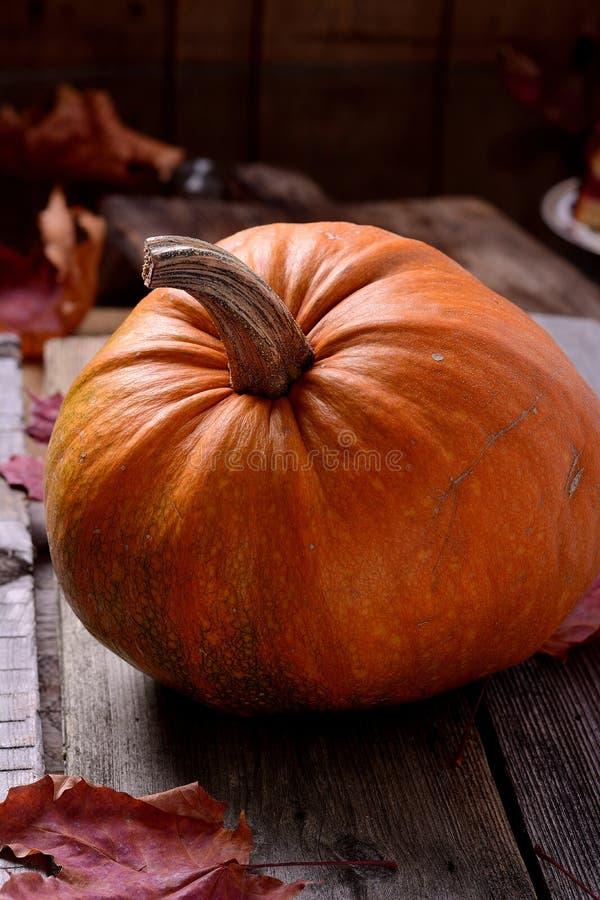 老树静物画秋天的南瓜 免版税图库摄影
