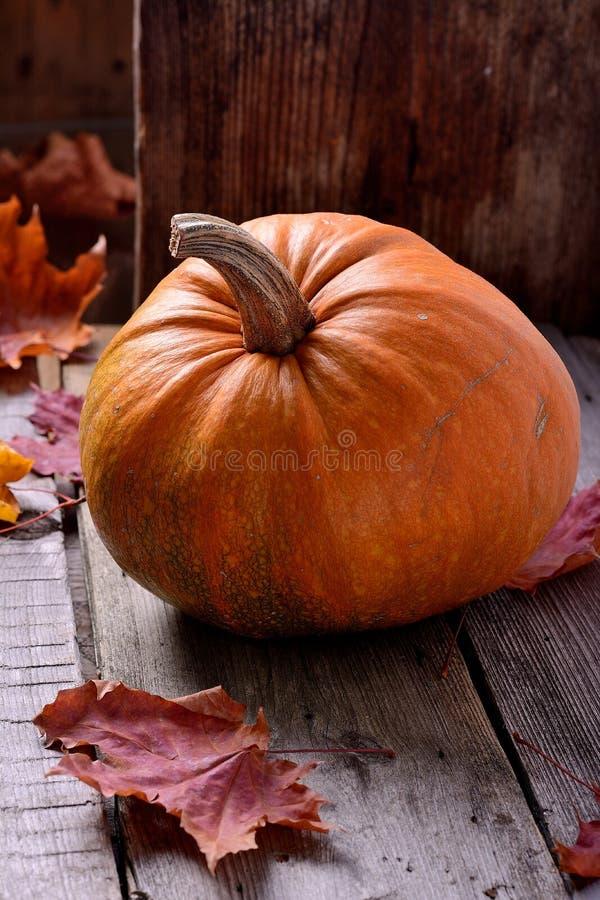 老树静物画秋天的南瓜 图库摄影