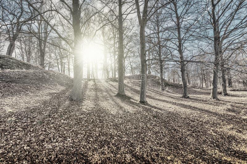 老森林在成为不饱和早期的春天 库存图片