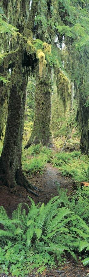 老森林增长 免版税库存图片