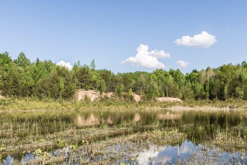 老森林湖,绿色树,干燥芦苇在黎明 免版税库存照片