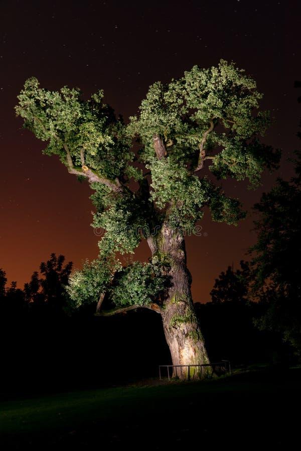 老橡木夜空 免版税库存照片