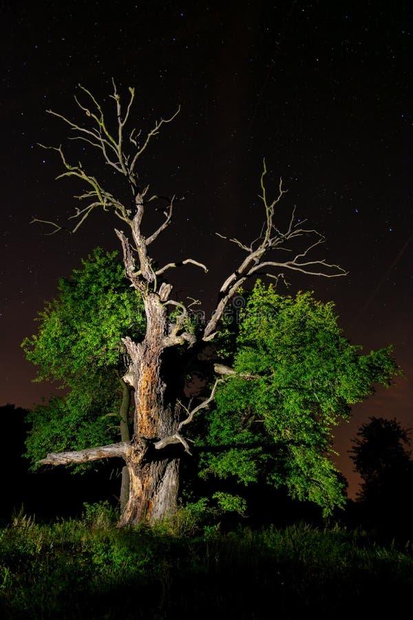 老橡木夜空 图库摄影