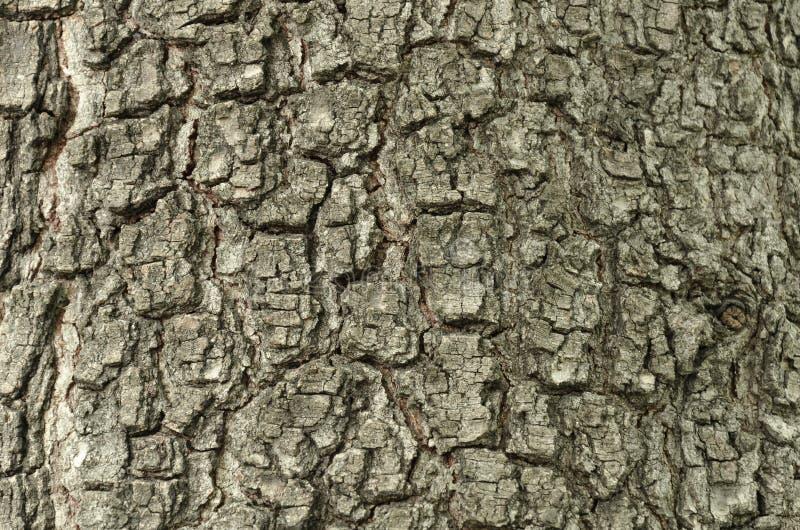 老橡木无缝的Tileable纹理吠声 免版税库存照片
