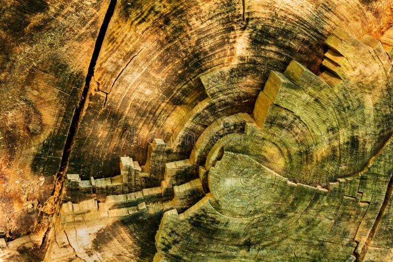 老橡木环型圆环  库存图片