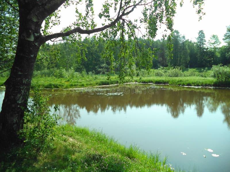 老池塘在公园在夏天 免版税库存图片