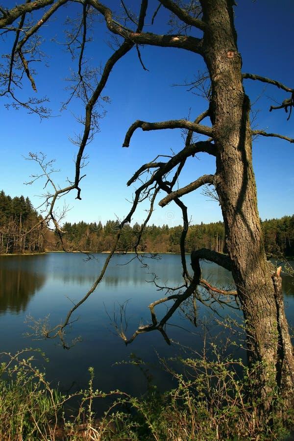 老池塘结构树 免版税库存照片