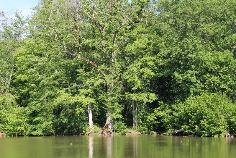 老池塘 免版税库存照片