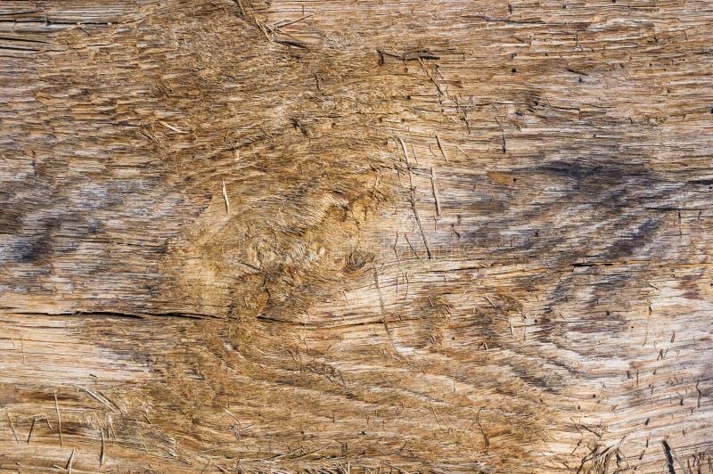 老漂流木头纹理,洗涤由海 库存照片