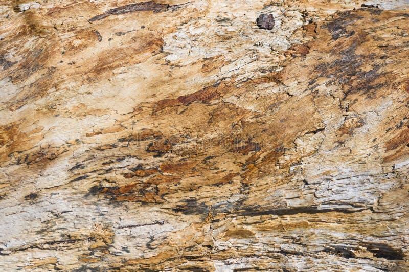 老漂流木头纹理,洗涤由海 免版税库存照片
