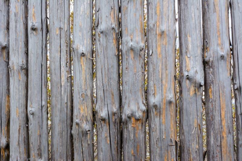 老灰色木篱芭背景纹理从整个日志的与结 破旧的篱芭 免版税库存照片