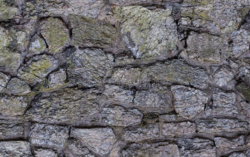 老灰色风化了用青苔岩石不对称的样式盖的庭院墙壁 免版税库存照片
