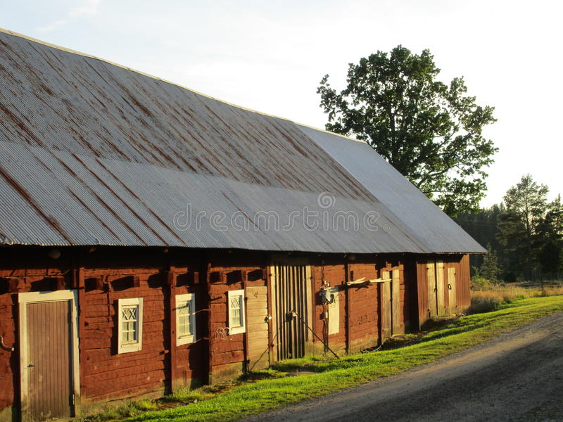 老牛棚在瑞典 库存图片