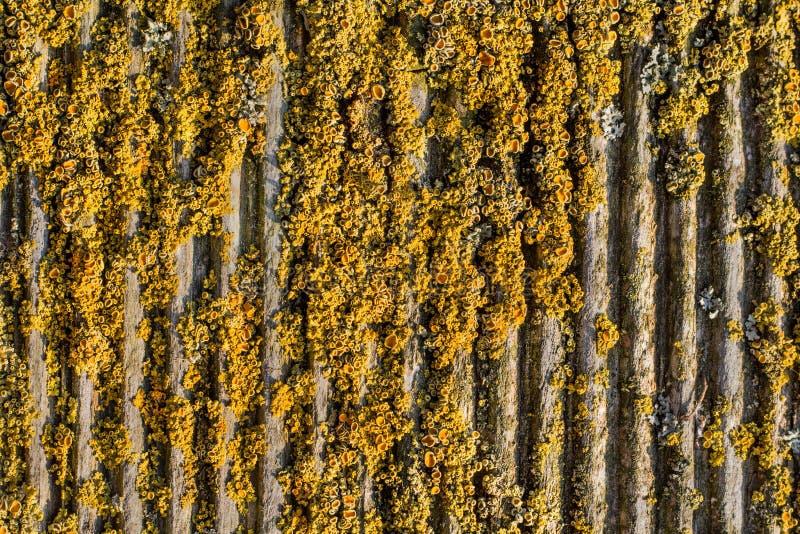 老犁的青苔木质的背景 图库摄影