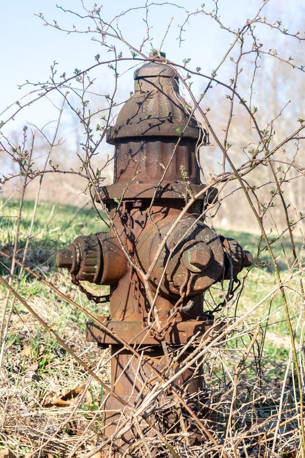 老生锈的长得太大的消防栓,在一个领域在纽约上州 库存图片