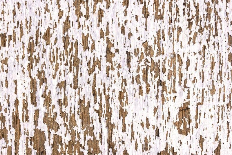 老白色木纹理 免版税库存图片