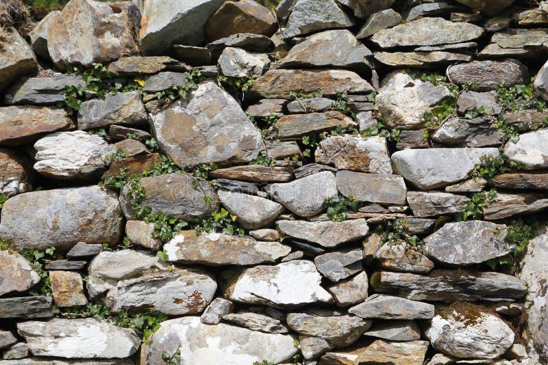 老石墙,有常春藤的 免版税库存图片