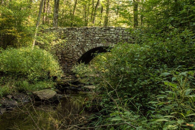 老石桥梁在森林 库存照片