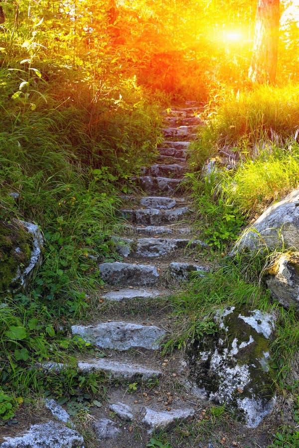 老石楼梯在森林里 图库摄影