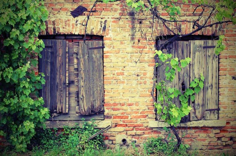 老砖房子和藤分支葡萄园的两个窗口 免版税库存图片