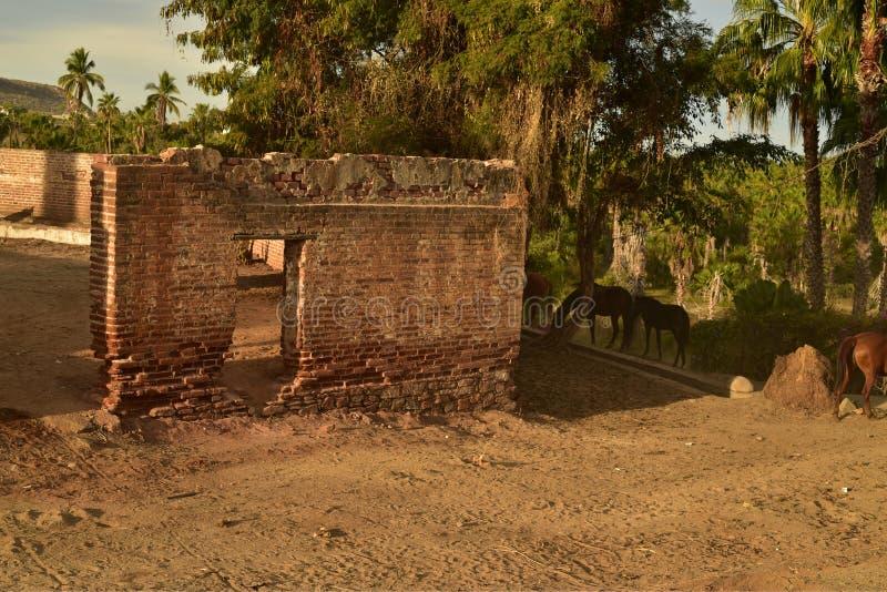 老砖糖厂废墟在Todos桑托斯,巴哈,墨西哥的 免版税图库摄影